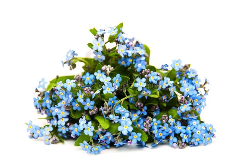 Glömma-mig-nots blommor royaltyfri foto