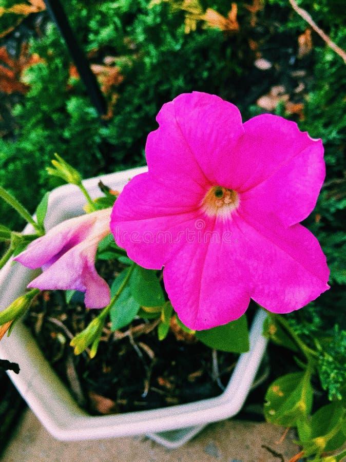 Glück in einer Blume stockfotos
