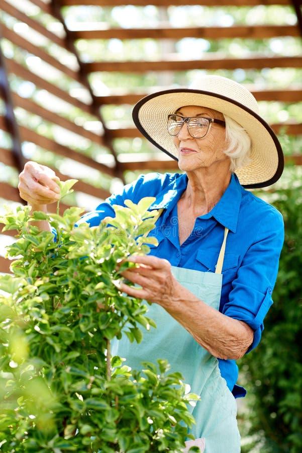 Glückliche ältere Frau, die für Anlagen sich interessiert lizenzfreie stockbilder