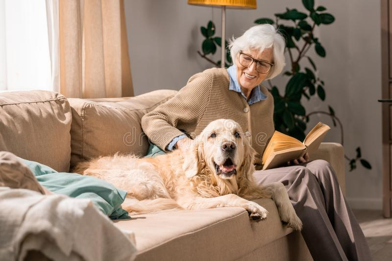 Glückliche ältere Frau, die mit Hund auf Couch streichelt lizenzfreie stockfotos