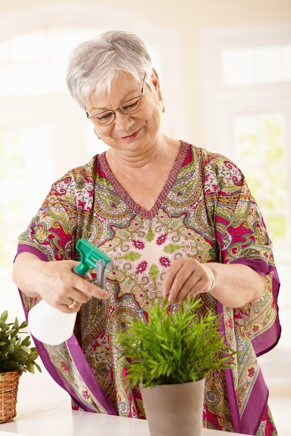 Glückliche ältere Frauenbewässerungsanlage stockbild