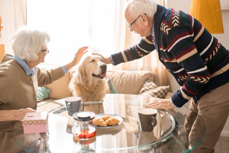 Glückliche ältere Paare mit Haustier stockbilder