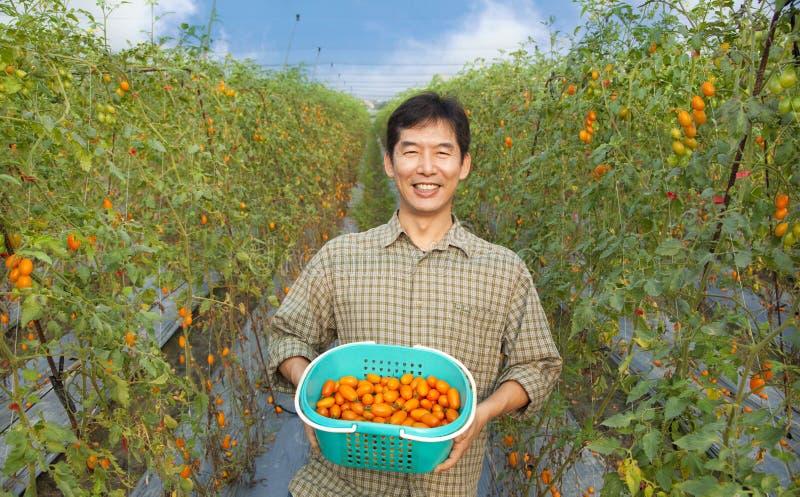 Glückliche asiatische Landwirtholdingtomate lizenzfreie stockbilder