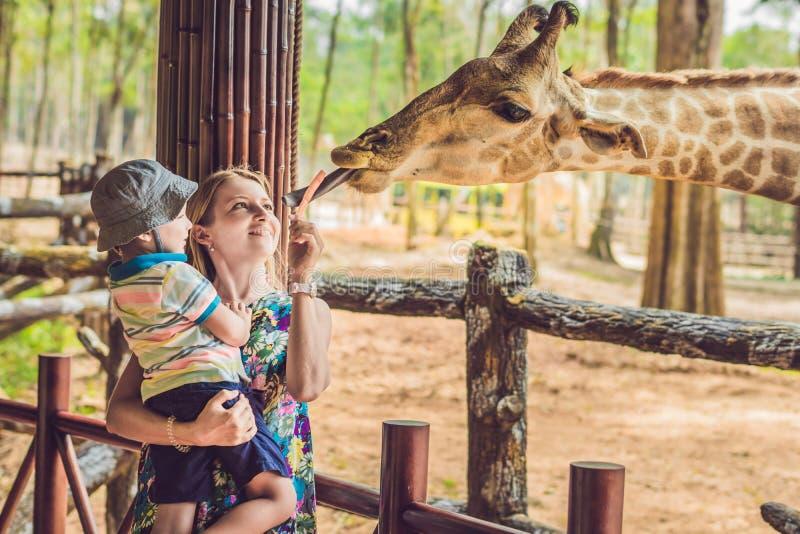 Glückliche aufpassende und Fütterungsgiraffe der Mutter und des Sohns im Zoo Glückliche Familie, die Spaß mit Tiersafari-park am  lizenzfreie stockbilder