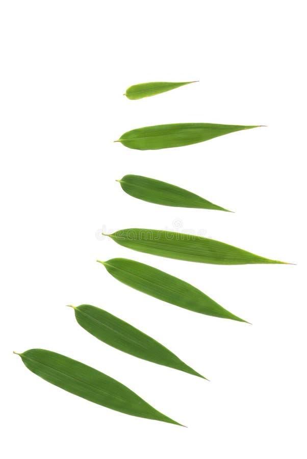 Glückliche Bambusblätter stockfotos