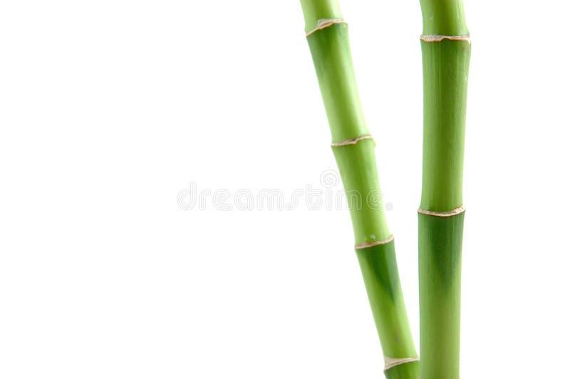 Glückliche Bambusstämme stockfotos