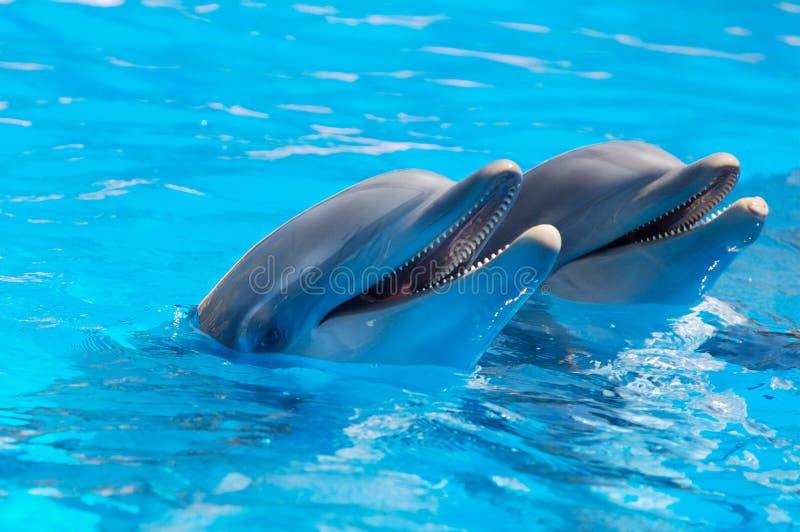 Glückliche Delphine stockbild