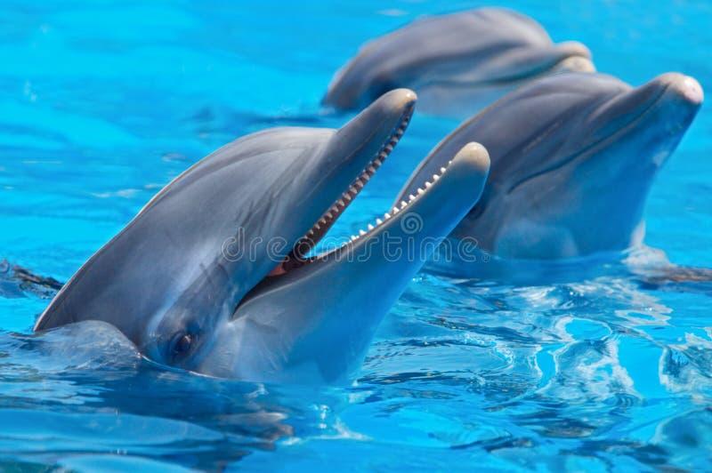 Glückliche Delphine stockfotos