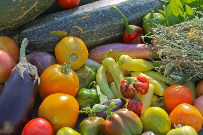 Download Glückliche Ernte stockfoto. Bild von herbst, pfeffer - 27731206