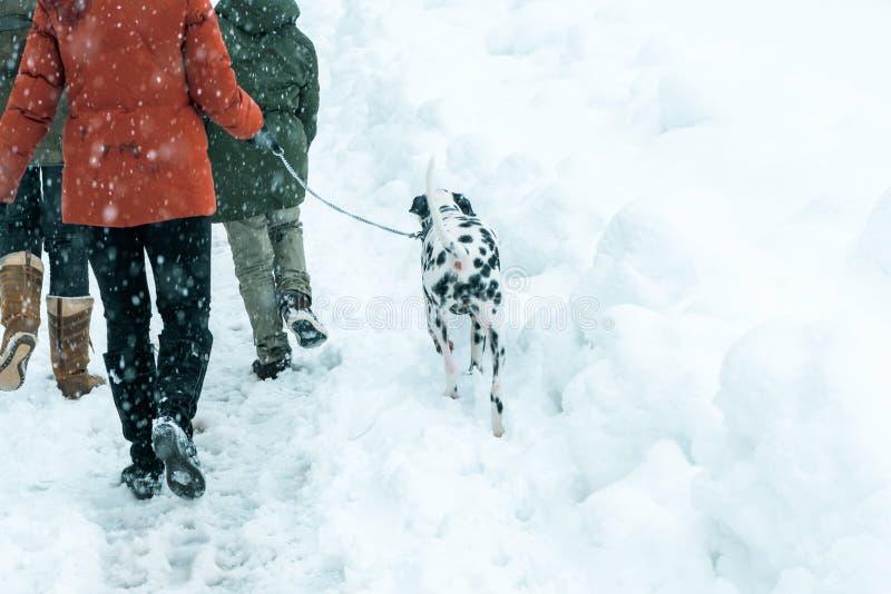 Glückliche Familie, die dalmatinischen Hund im Winterschnee geht stockbild