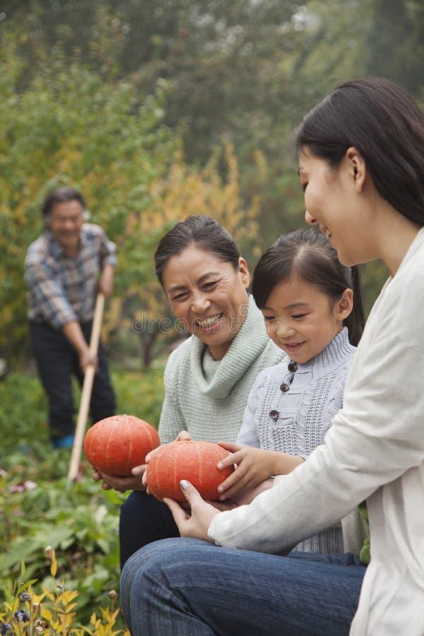 Glückliche Familie, die Gemüse im Garten erntet stockbilder