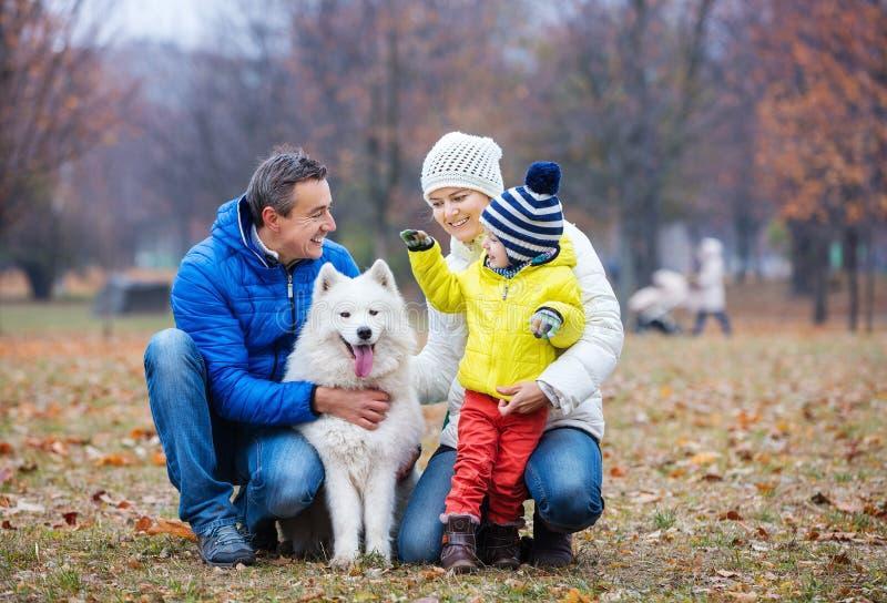Glückliche Familie, die mit einem Samoyedhund im Herbstpark spielt lizenzfreie stockfotos