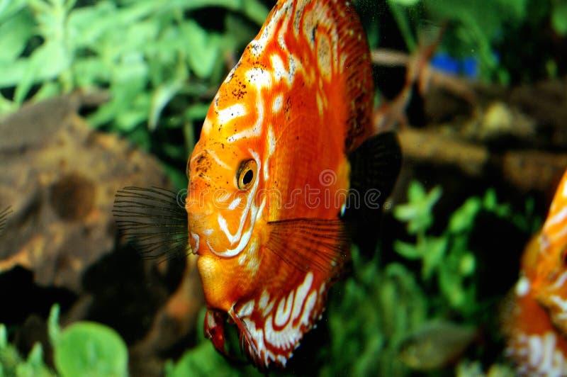 Download Glückliche Fische stockbild. Bild von fische, tropisch - 9088223