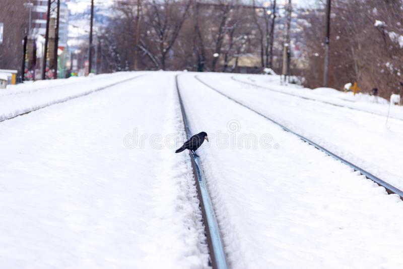 Glückliche Frau im Winter lizenzfreies stockfoto