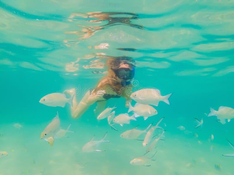 Glückliche Frau, wenn das Maskentauchen geschnorchelt wird, das mit tropischen Fischen im Korallenriffseepool Unterwasser ist Rei lizenzfreie stockbilder