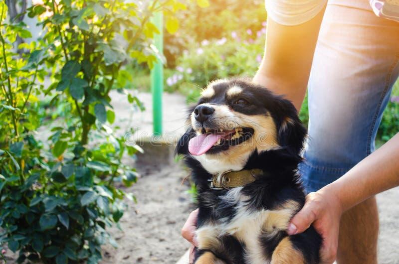 Glückliche Freizeit mit geliebtem Hund! der Kerl spielt mit einem Haustier im Garten/im Park an einem sonnigen Tag Schwarzes Hünd stockbilder