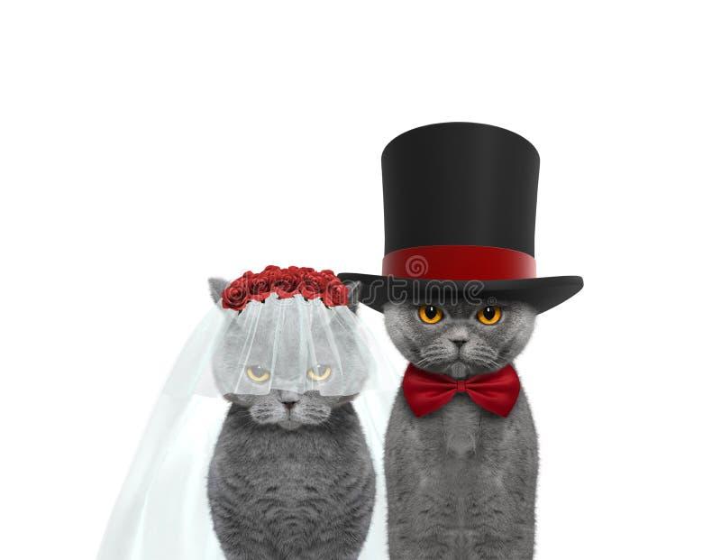 Glückliche Hochzeit der Katze Lokalisiert auf Weiß stockbild