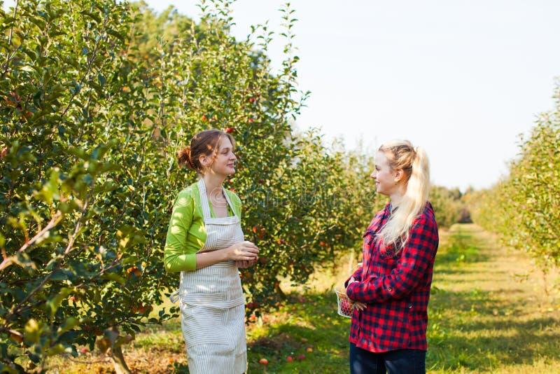 Glückliche junge Frauen, die im Apfelgarten sprechen lizenzfreie stockfotografie
