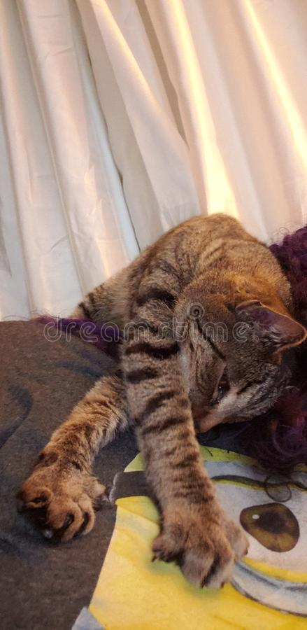 Glückliche Katze entspannt lizenzfreies stockfoto