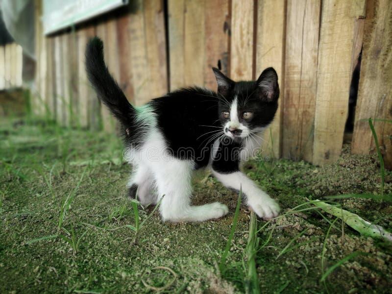 Glückliche Katzen reizend lizenzfreies stockfoto