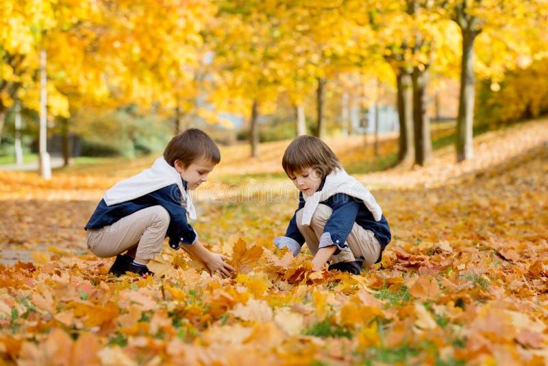 Glückliche Kinder, Jungenbrüder, spielend im Park, werfendes leav stockfoto