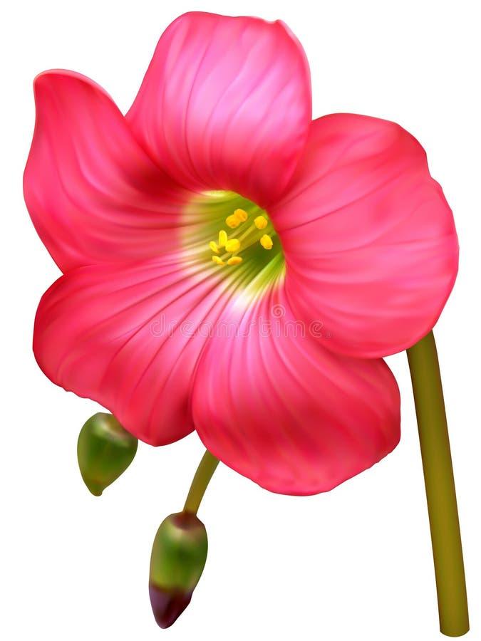 Glückliche Kleeblume lizenzfreie abbildung