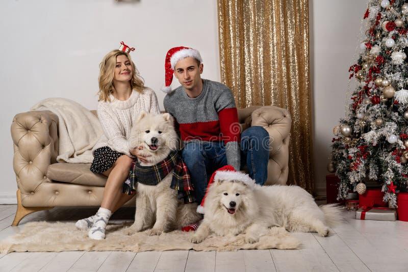 Glückliche liebevolle junge Leute und Hunde, die nahe dem Weihnachtsbaum aufwerfen stockbilder