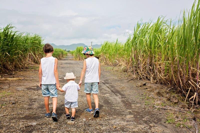Glückliche Menschen, Kinder, Betrieb auf dem Zuckerrohrgebiet auf Mauritius-Insel lizenzfreies stockbild