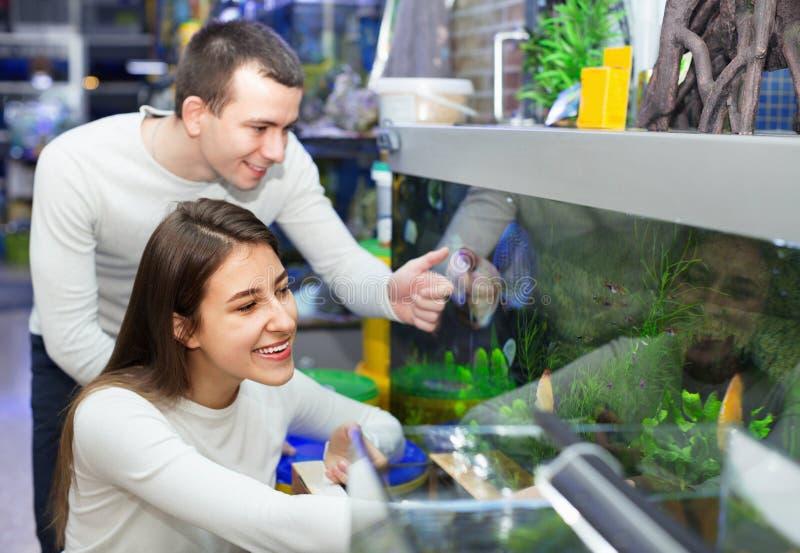 Glückliche positive lächelnde Kunden, die tropische Fische vorwählen stockfotos