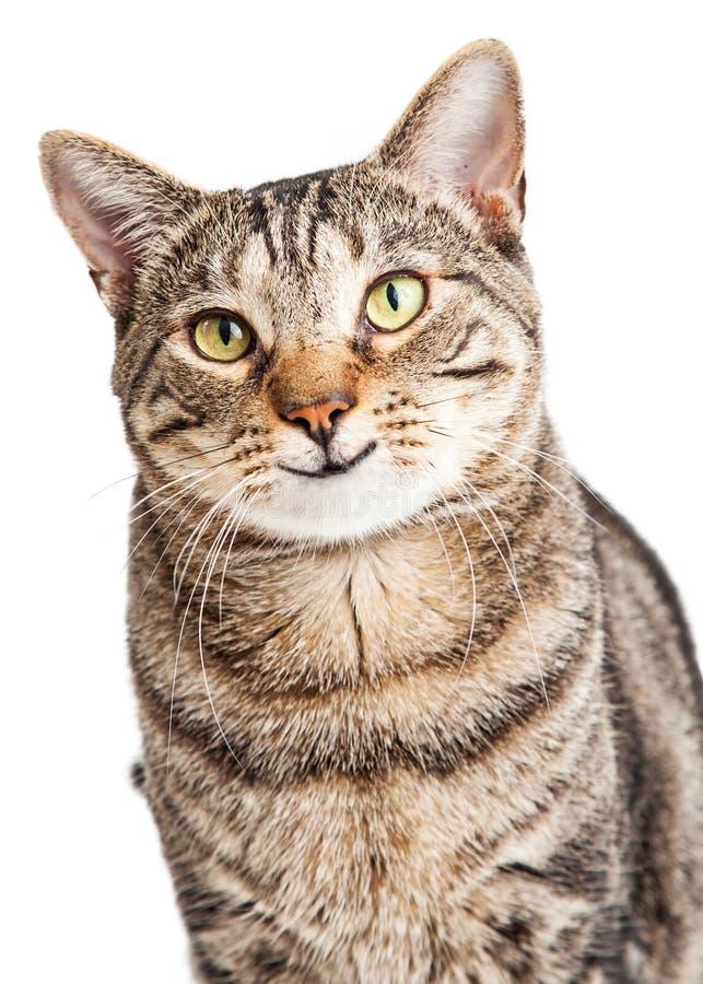 Glückliche Tabby Cat Looking Forward lizenzfreie stockfotografie