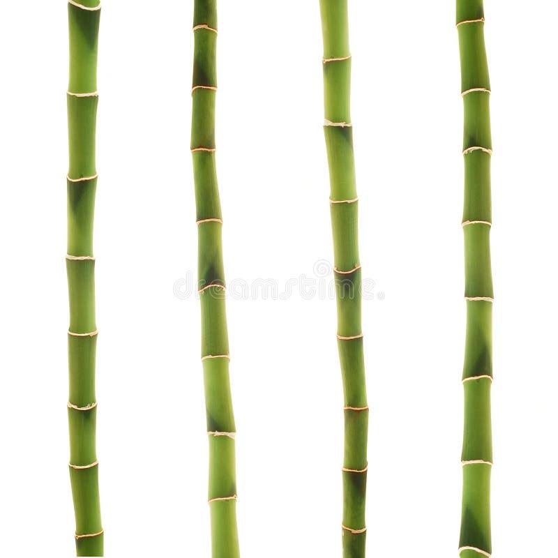 Glücklicher Bambus stockfotografie