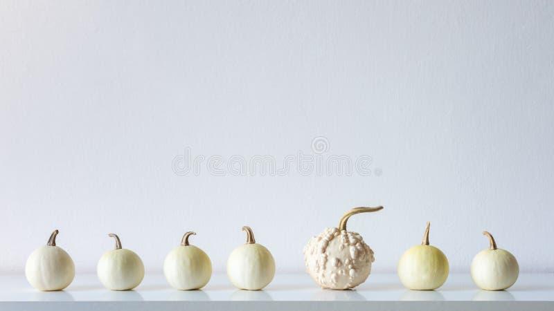 Glücklicher Danksagungs-Hintergrund Auswahl von kleinen weißen Kürbisen auf weißem Regal gegen weiße Wand Herbstraumdekoration stockfotografie