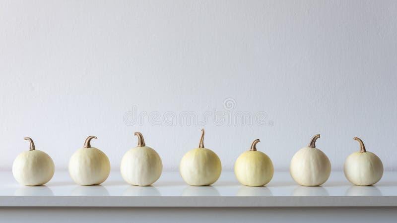 Glücklicher Danksagungs-Hintergrund Auswahl von kleinen weißen Kürbisen auf weißem Regal gegen weiße Wand Moderne Raumdekoration lizenzfreies stockbild