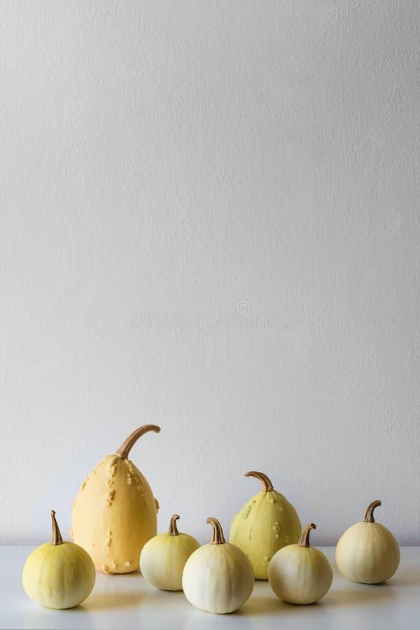 Glücklicher Danksagungs-Hintergrund Auswahl von verschiedenen Kürbisen auf weißem Regal gegen weiße Wand Herbst spornte Raumdekor lizenzfreies stockfoto