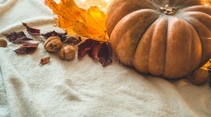 Glücklicher Danksagungs-Tageshintergrund, im verzierten Hauptkürbis, in den Kegeln, in den Nüssen und in der Herbstlaubgirlande F lizenzfreies stockfoto