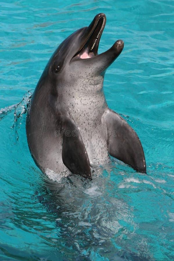 Glücklicher Delphin lizenzfreie stockfotos