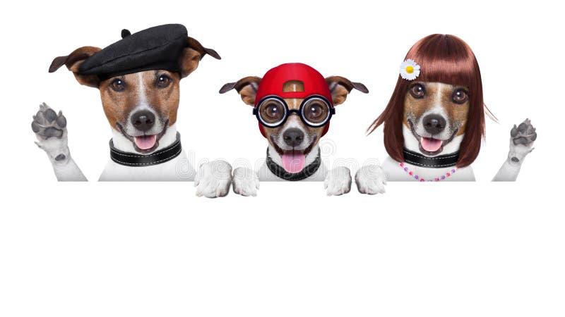 Glücklicher Familienhund lizenzfreie stockbilder