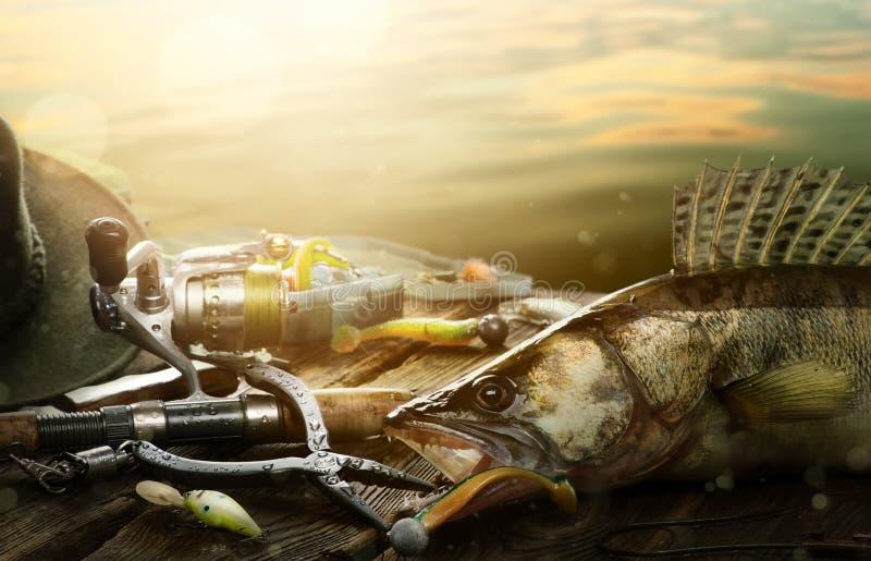 Glücklicher Fischenhintergrund; Angelausrüstung und Trophäe zander stockfotografie