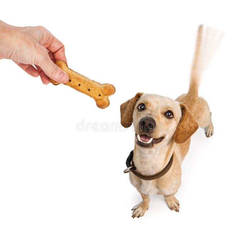 Glücklicher Hund, der Endstück für Festlichkeit wedelt lizenzfreie stockfotos