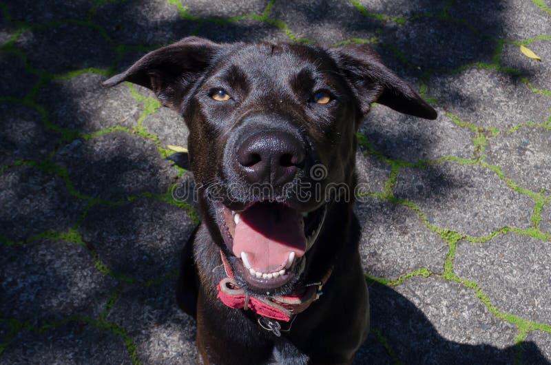 Glücklicher Hund, der für Kamera lächelt stockbild