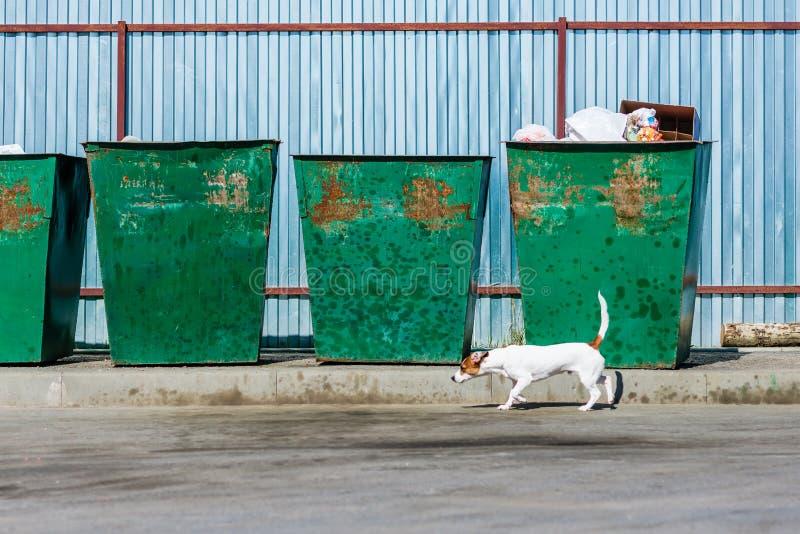 Glücklicher Hund, der nahe dem Abfall geht lizenzfreie stockfotografie