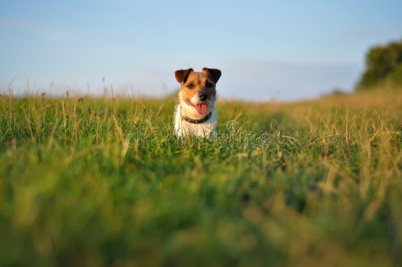 Glücklicher Hund im Park stockbilder