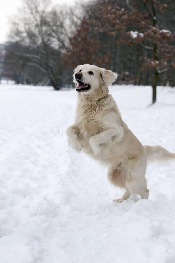 Glücklicher Hund im snov stockbild