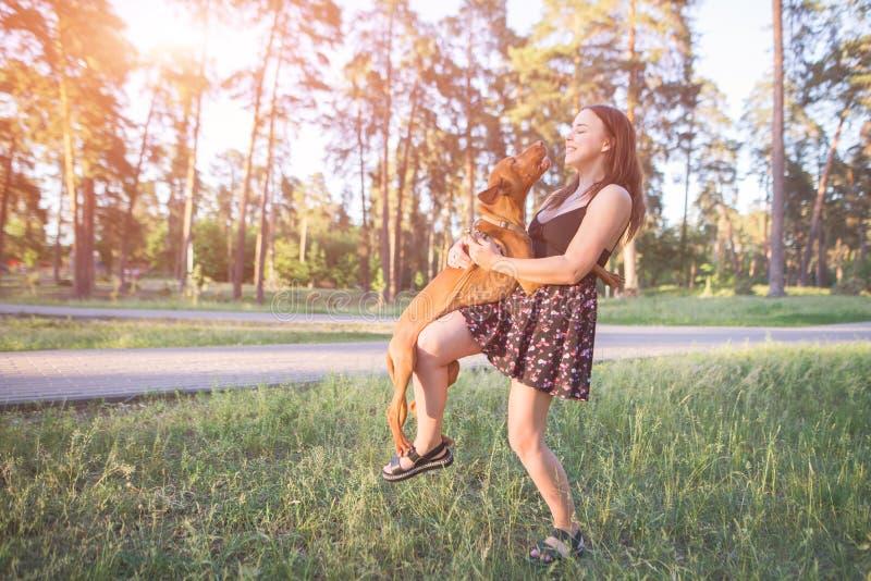 Glücklicher Hund spielt mit einem spielerischen Hund während eines Wegs im Park Freizeit mit einem Haustier im Freien stockfoto