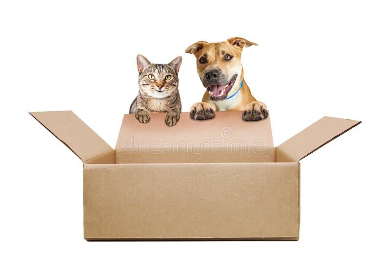Glücklicher Hund und Cat Over Empty Shipping Box lizenzfreie stockfotografie
