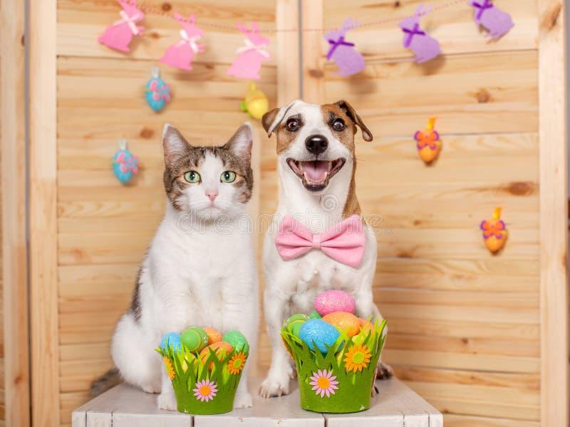 Glücklicher Hund und Katze mit Ostereiern lizenzfreie stockbilder
