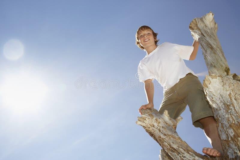 Glücklicher Junge, der auf totem Baum-Stamm klettert lizenzfreie stockfotografie