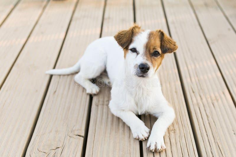 glücklicher junger Hund, der auf einer hölzernen Brücke betrachtet die Kamera sitzt drau?en Haustiere und Lebensstil lizenzfreies stockfoto