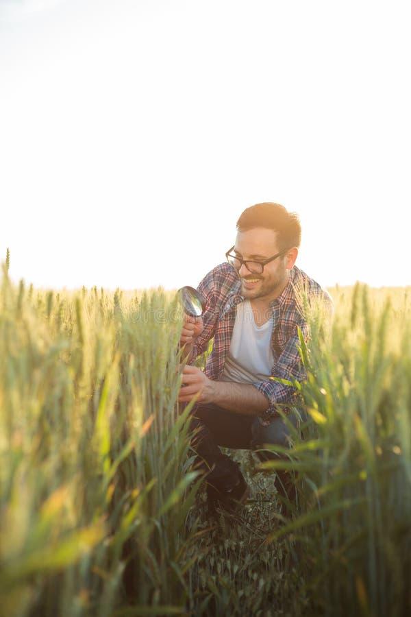 Glücklicher junger Landwirt oder Agronom, die Samenentwicklung überprüfen und nach Parasiten mit Lupe suchen lizenzfreies stockbild