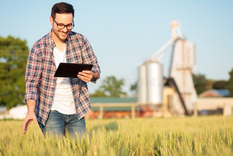 Glücklicher junger Landwirt oder Agronom, die Weizenanlagen auf einem Gebiet, arbeitend an einer Tablette kontrolliert lizenzfreie stockfotos